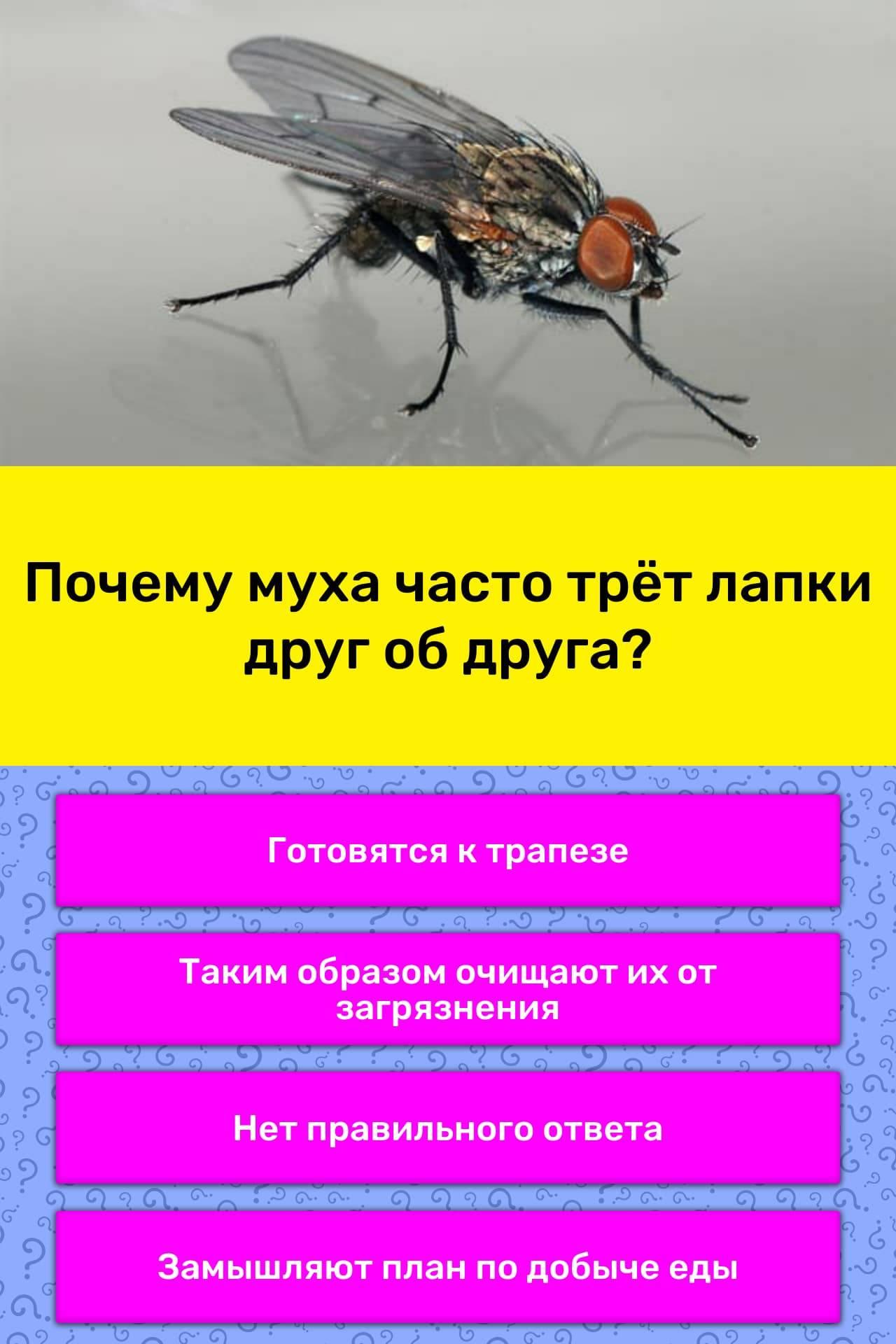 Почему мухи лапки моют. для чего мухи потирают лапками? среднее время прочтения: | интересные факты