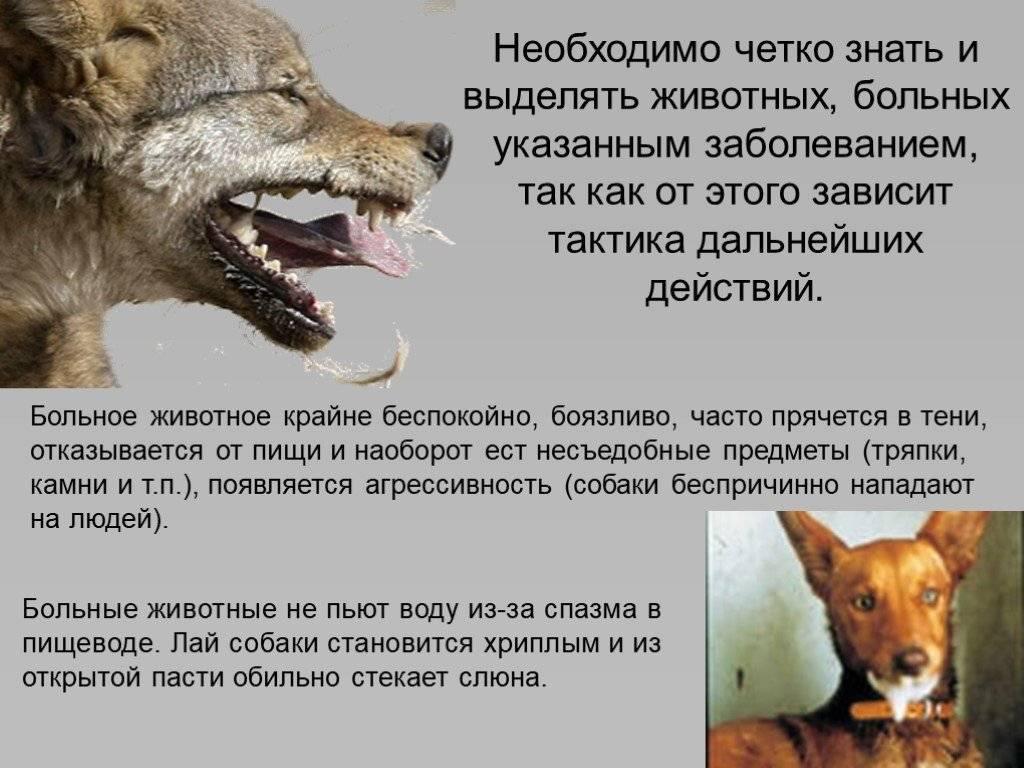 В каких случаях крысы нападают на человека   сухарева башня