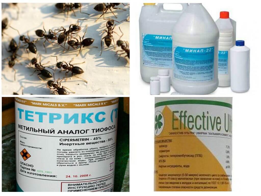 Как избавиться от муравьев в деревянном доме своими силами
