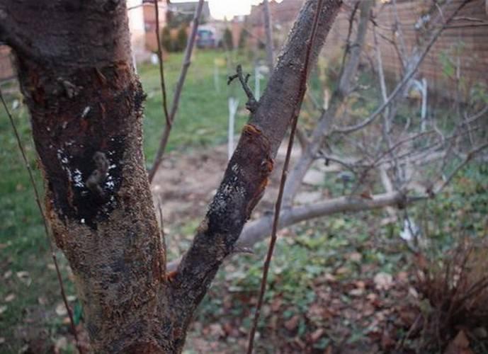 Вредители яблони — методы борьбы. защита и обработка. фото — ботаничка.ru