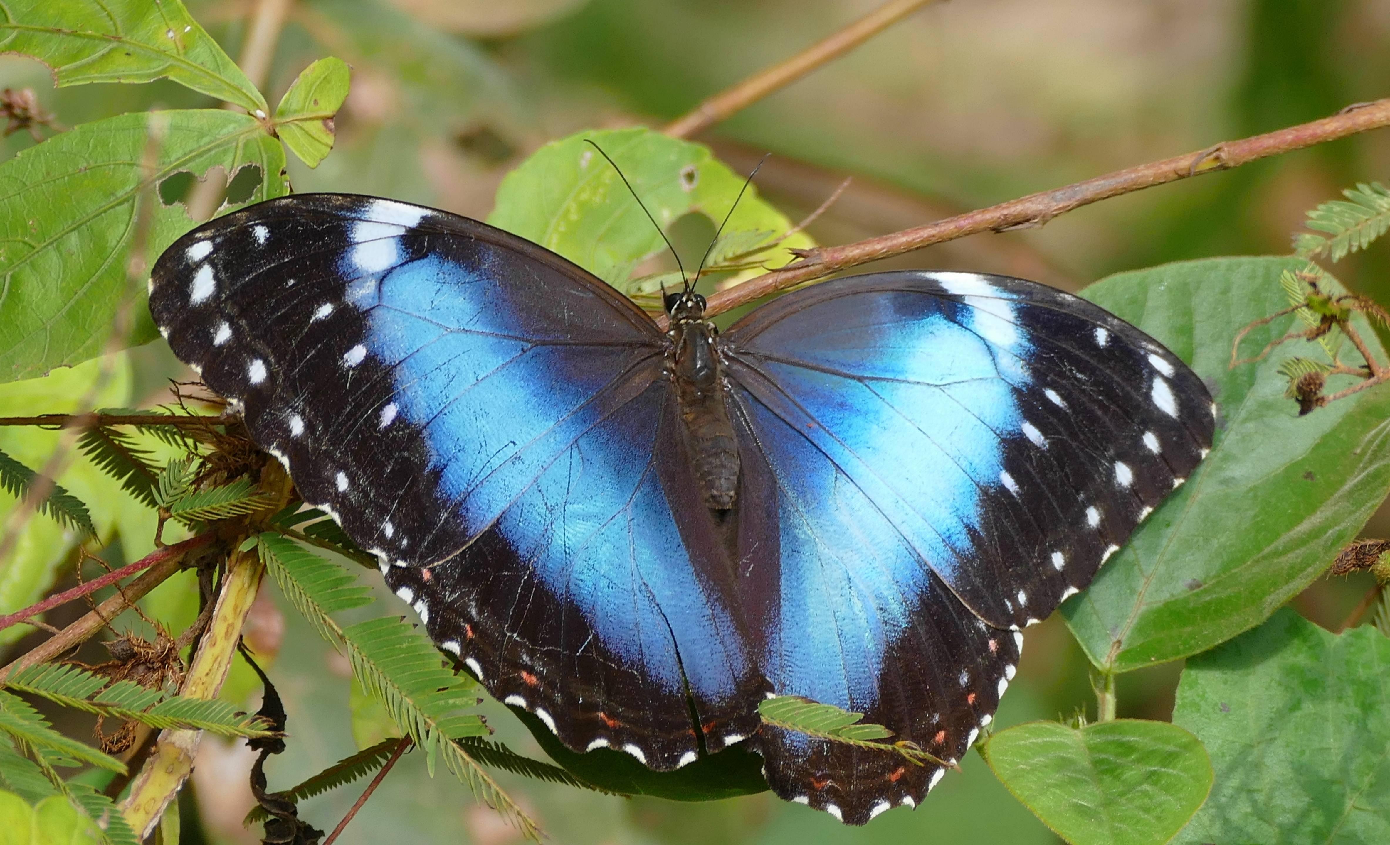 Животные влажных тропических лесов африки и амазонки - птицы и насекомые