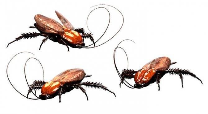 К чему снятся тараканы: сонник