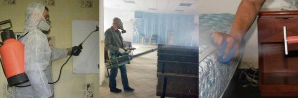 Уничтожение клопов в москве с гарантией: обработка квартиры, цена, отзывы