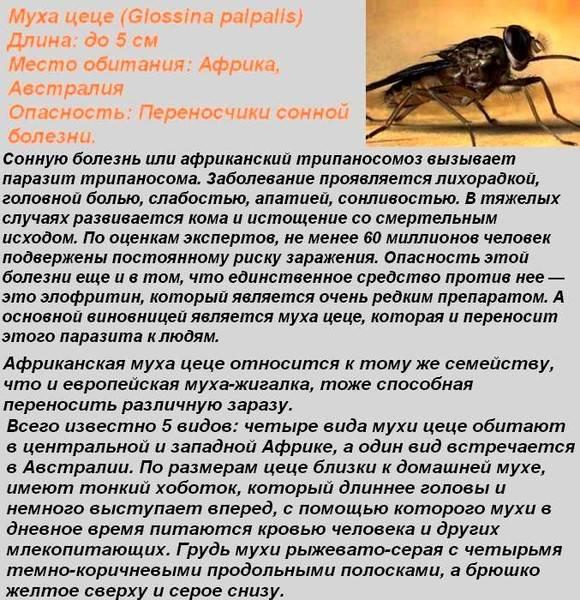 Мушка маленькая – вред огромный: стратегия борьбы с опасным вредителем – злаковой мухой