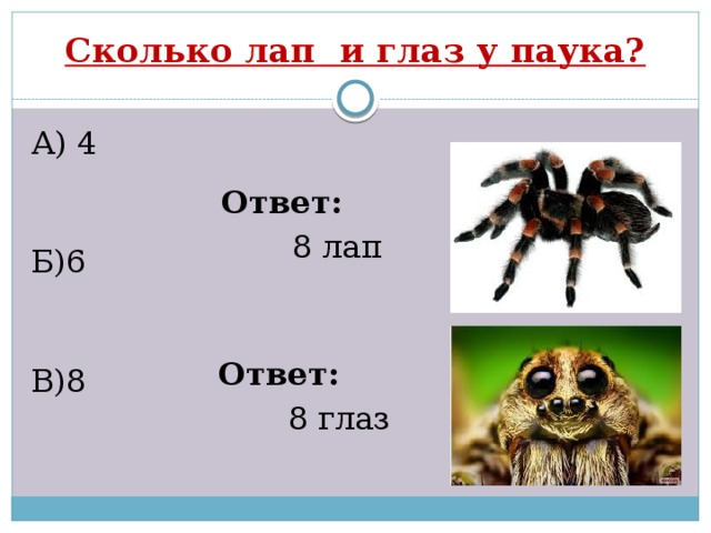 Сколько лап у паука - все о суставах