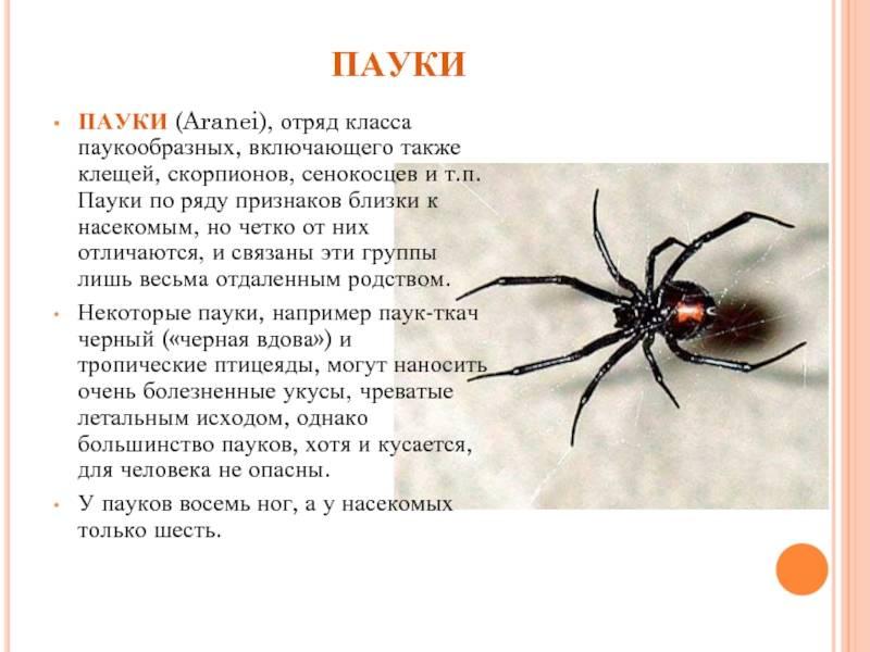 К какому классу относятся пауки — факты и виды