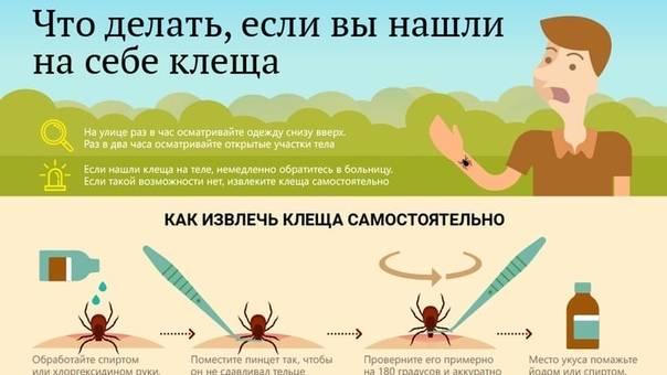 Что делать если укусил клещ? первая помощь, как вытащить клеща? заболевания, передающиеся через укусы клещей. профилактика клещевого энцефалита, прививка.