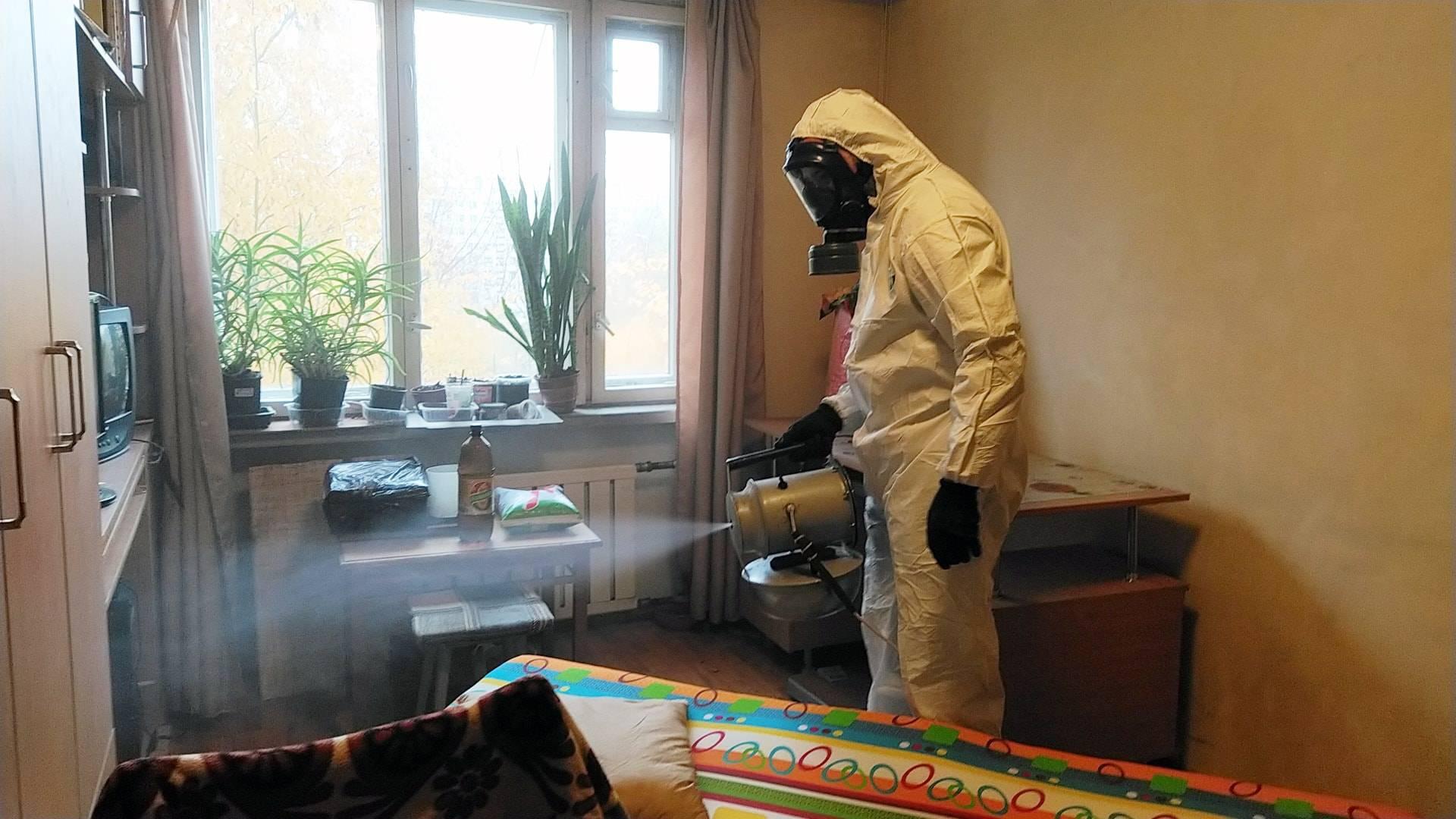 Как избавиться от блох дома и в квартире раз и навсегда? 100% методика