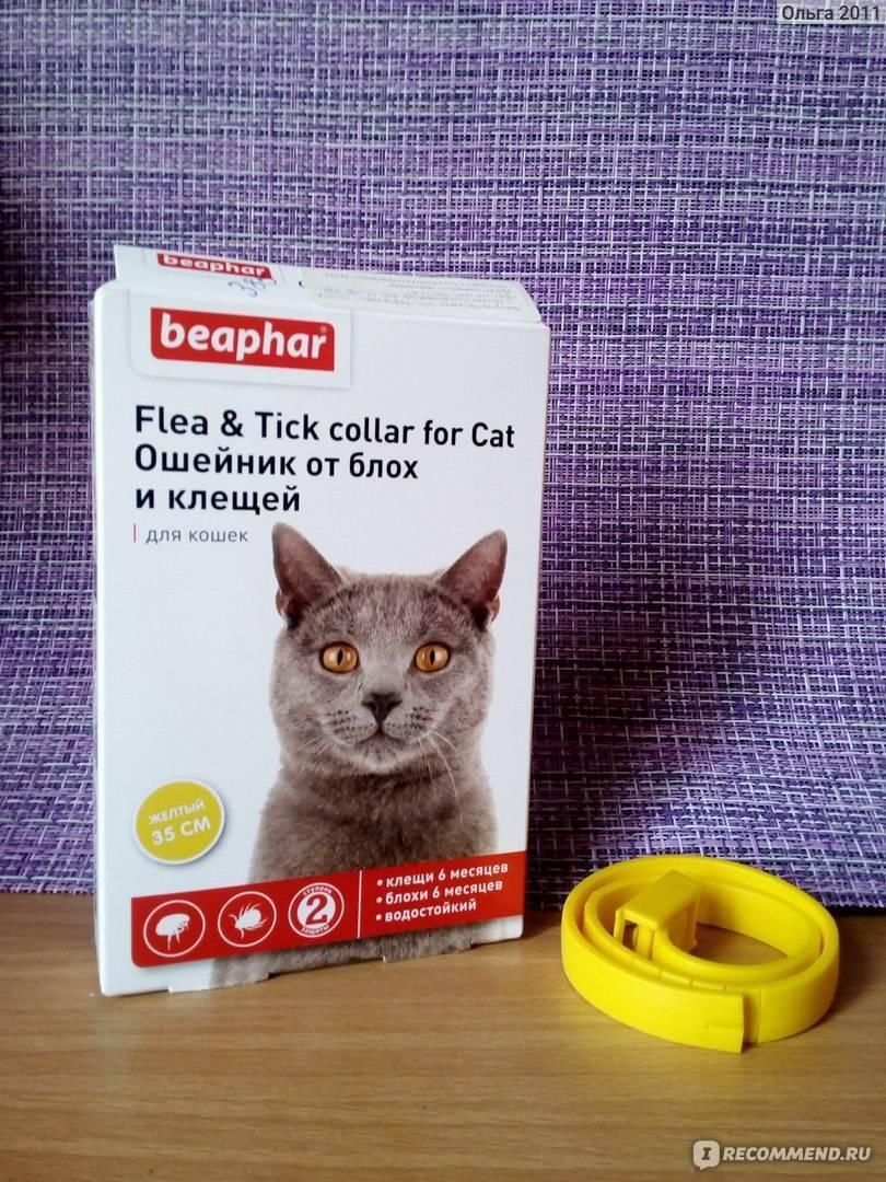 Ошейник для кошки от блох и клещей: советы, преимущества, виды