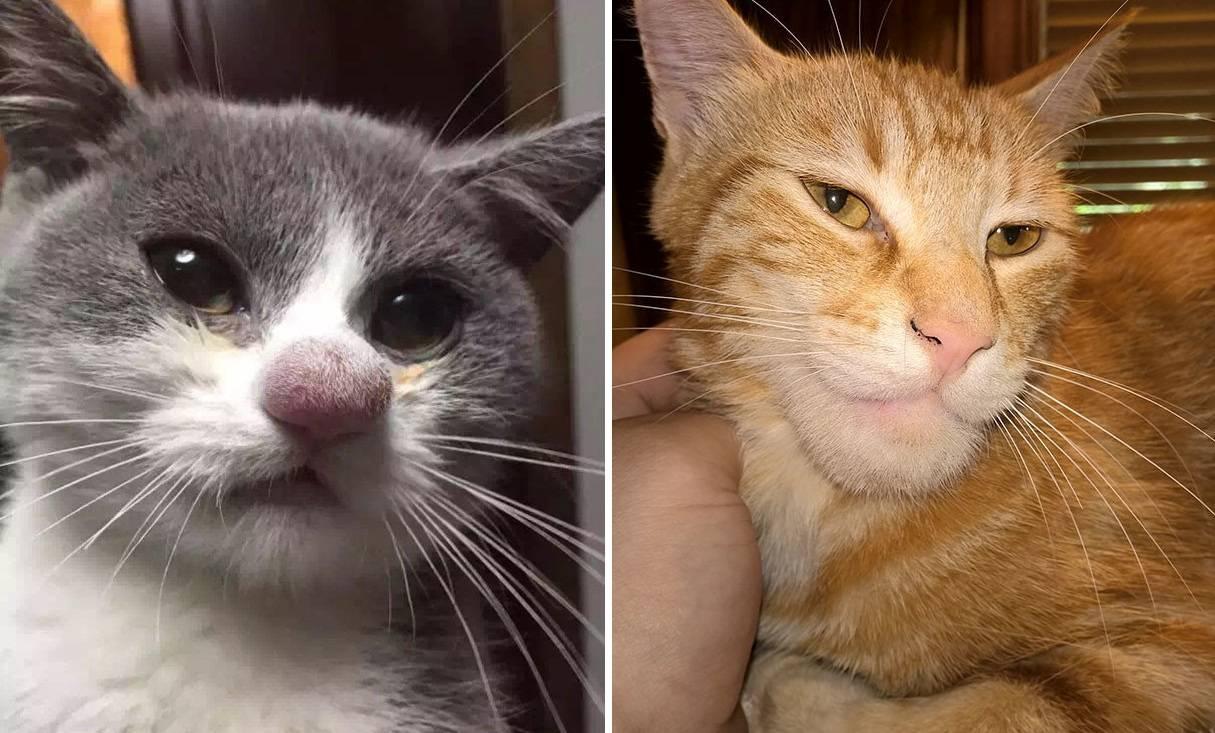 Что делать, если пчела или оса укусила кота в нос или лапу