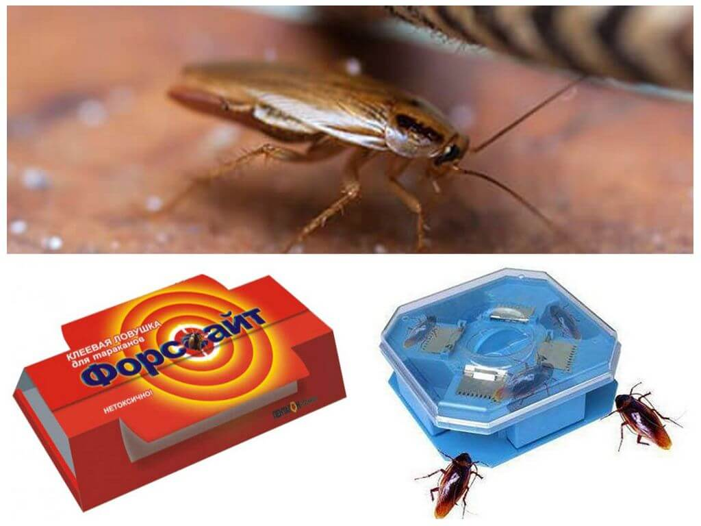 Как быстро и эффективно избавиться от тараканов в квартире навсегда