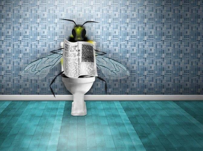 Что отпугивает мух в доме, во дворе и на улице: народные средства
