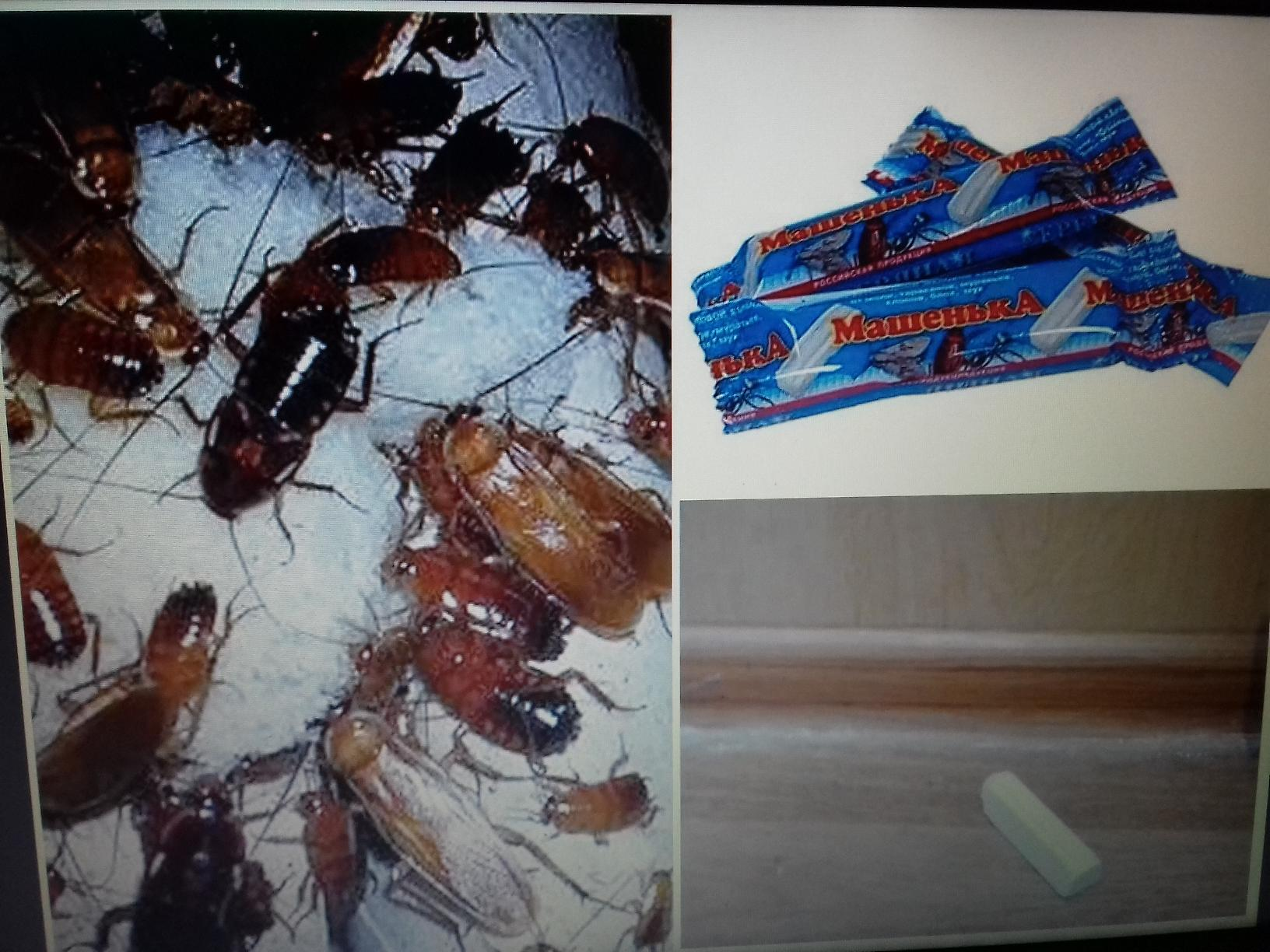 Мел от тараканов — инструкция по применению, главные плюсы