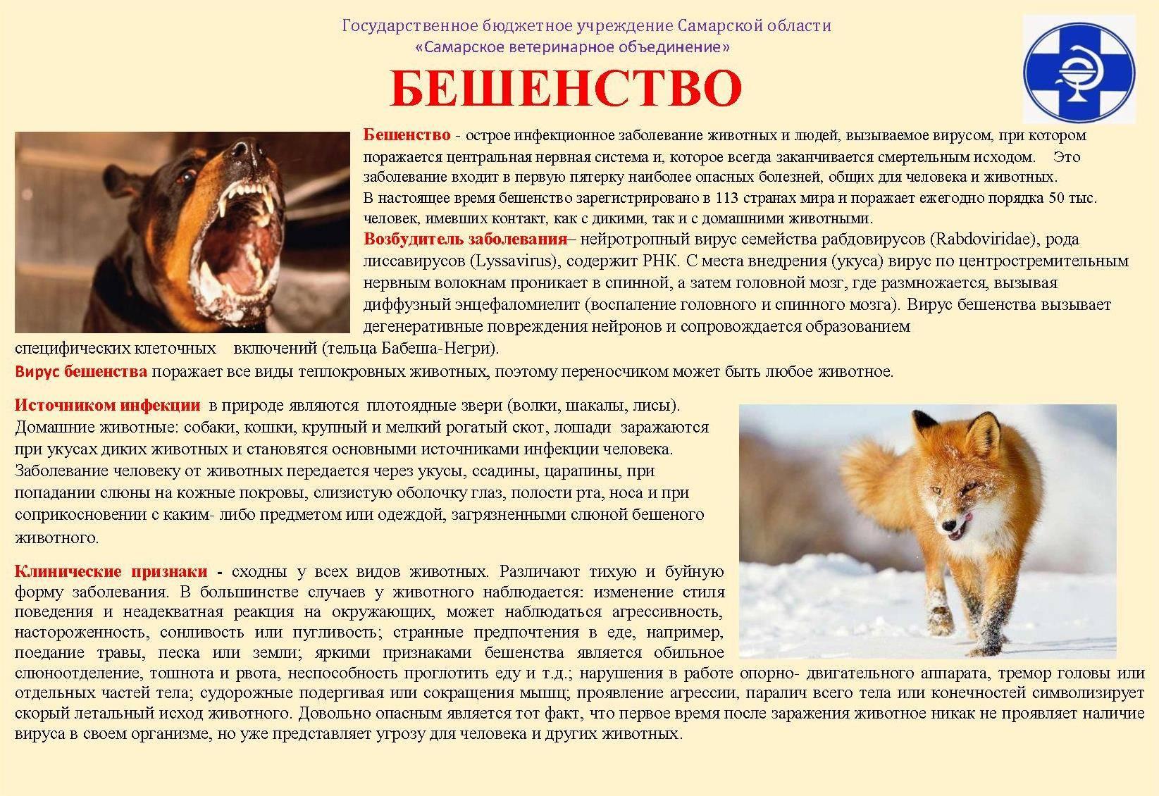 Могут ли крысы съесть человека   русская семерка