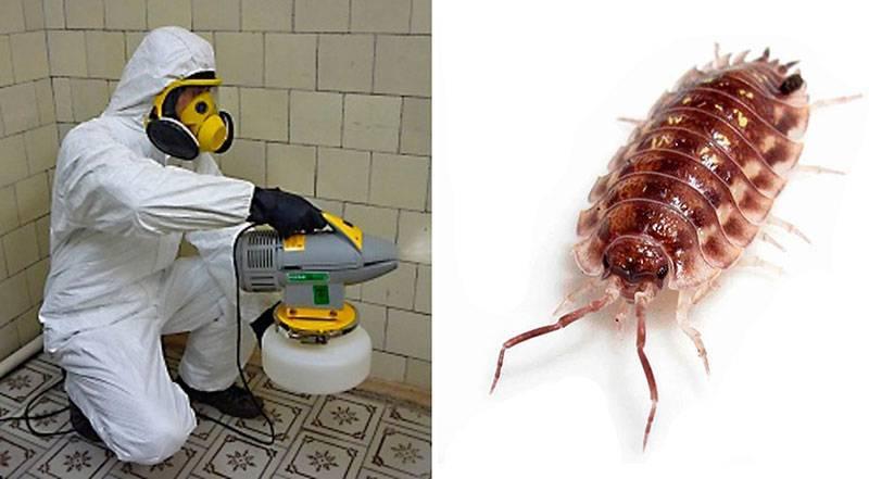 Осы в квартире – как прогнать опасных насекомых
