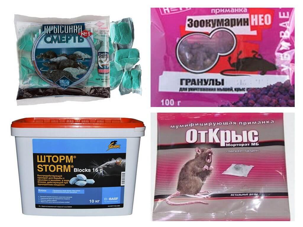 Отрава для крыс: эффективная травля крыс и мышей