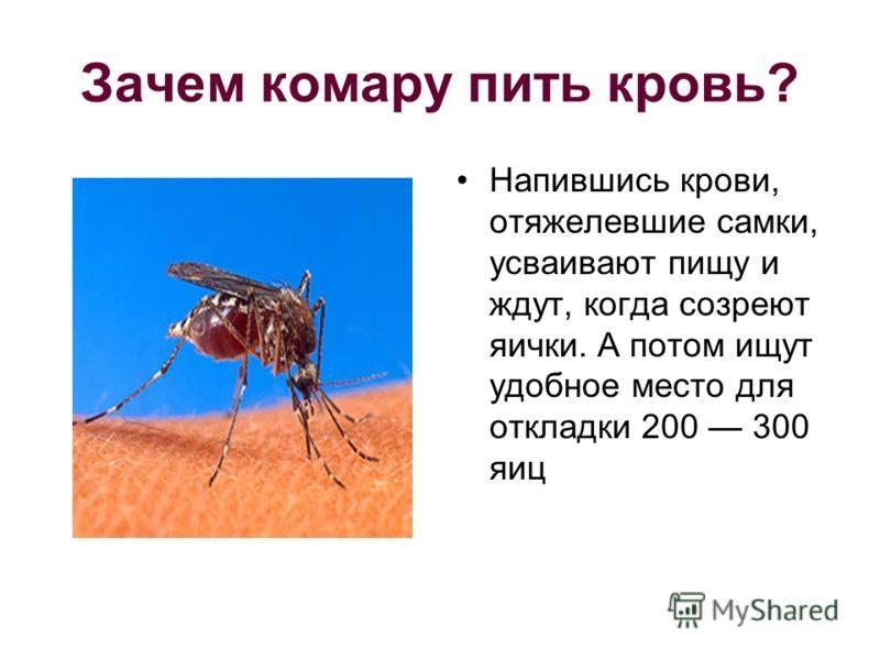 Сколько раз может кусать один комар, умирают ли комары после укуса
