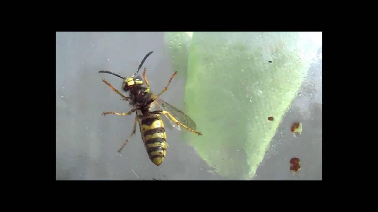 Чем и как отпугнуть ос на природе