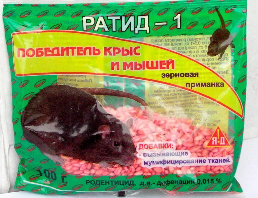 Крысиный яд - состав, его действие, опасность отравления