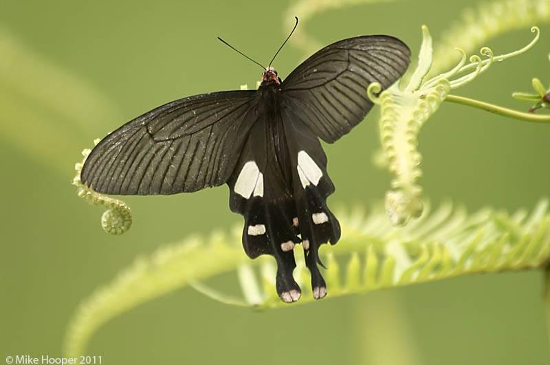 13 самых красивых бабочек в мире: названия, описание, фото, видео
