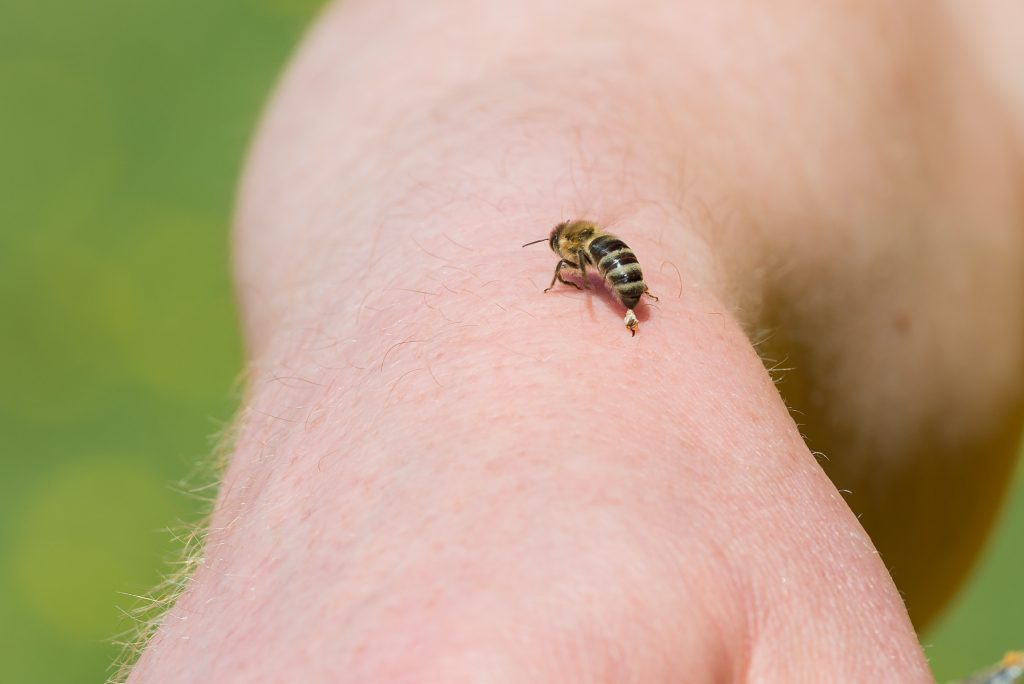 Опасны ли укусы пчёл и ос при беременности