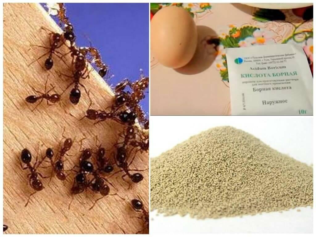 Как быстро вывести муравьев из дома: народные и химические средства