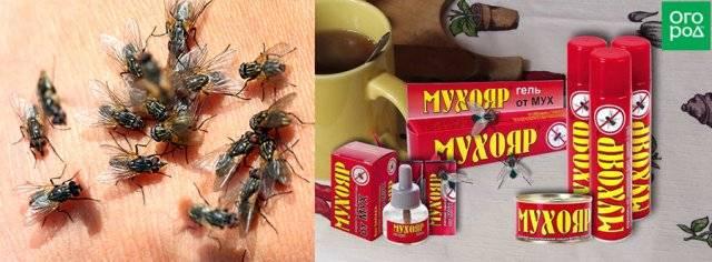 Эффективные средства от мух и от следов мух в доме