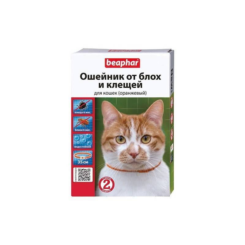 Ошейник от блох для кошки: как действует, критерии выбора, применение