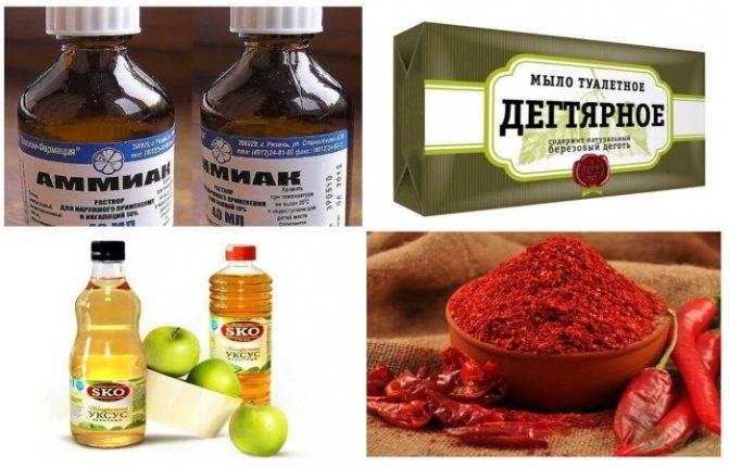 Народные средства от вредителей – рецепты без химии