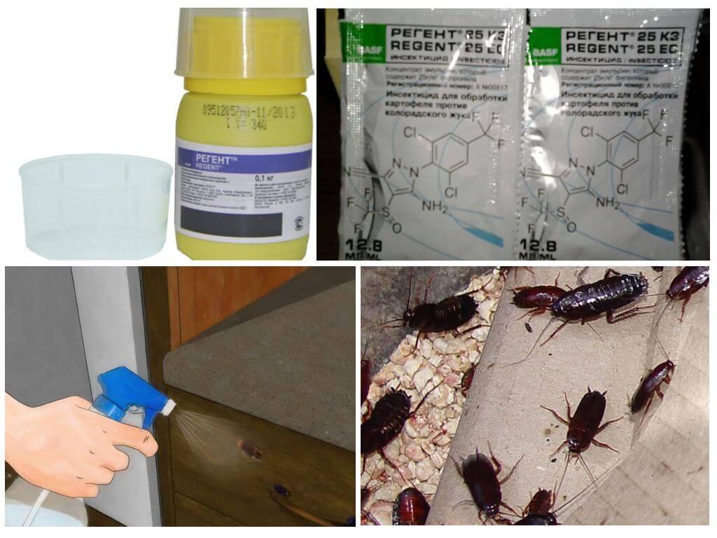 Регент от тараканов: как травить тараканов, описание, опасен ли для животных, как разводить, отзывы, применение
