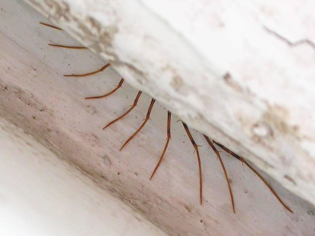 Венерина мухоловка: секреты выращивания цветка-хищника