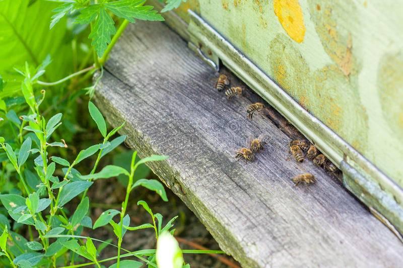 Злые пчелы. что делать?