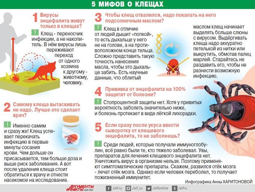 Лейкоз у коровы: можно ли пить молоко и есть мясо, передаётся ли человеку и чем опасно