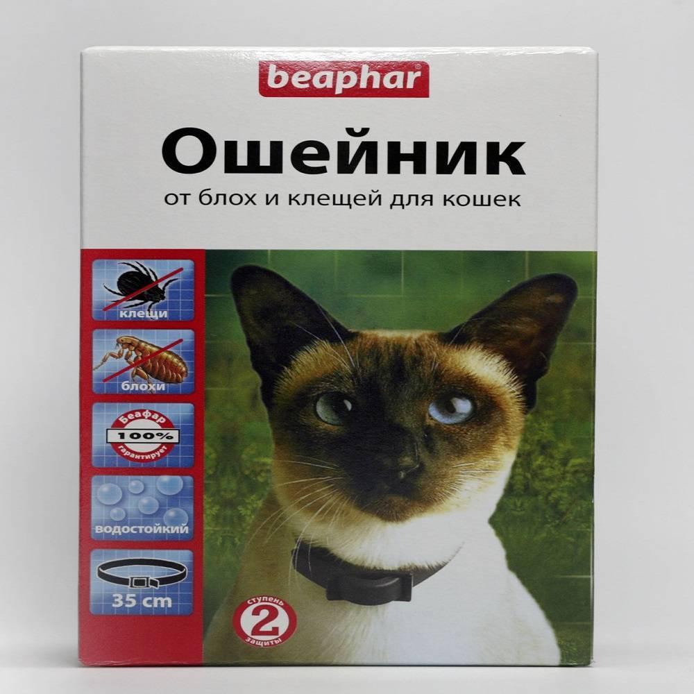 Ошейник от блох для кошек и котят: как действует и какой лучше