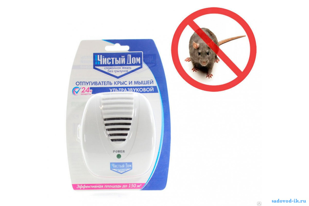 Какую траву боятся мыши и крысы в доме