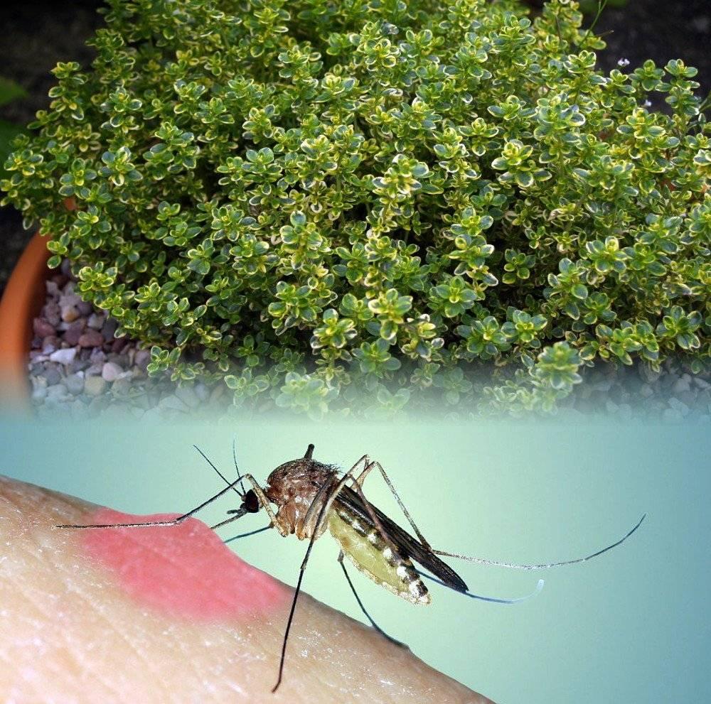Как избавиться от комаров на своем участке, обзор основных способов: инсектициды, растения-репелленты, приборы, обработка, народные методы, плюсы и минусы этих вариантов
