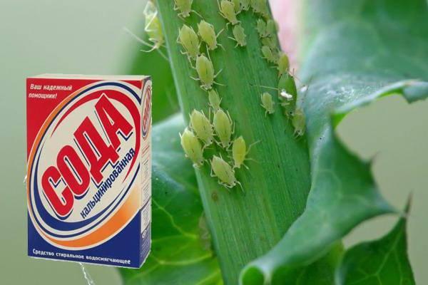 Применение соды в саду и огороде для опрыскивания и обработки растений