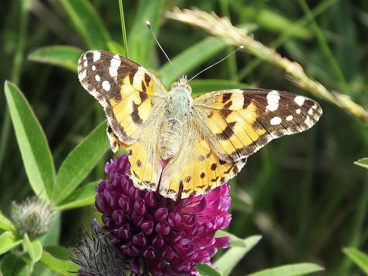 Бабочки долины сукко