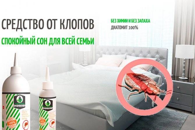 Пахнут ли постельные клопы, чем отличаются от домашних?