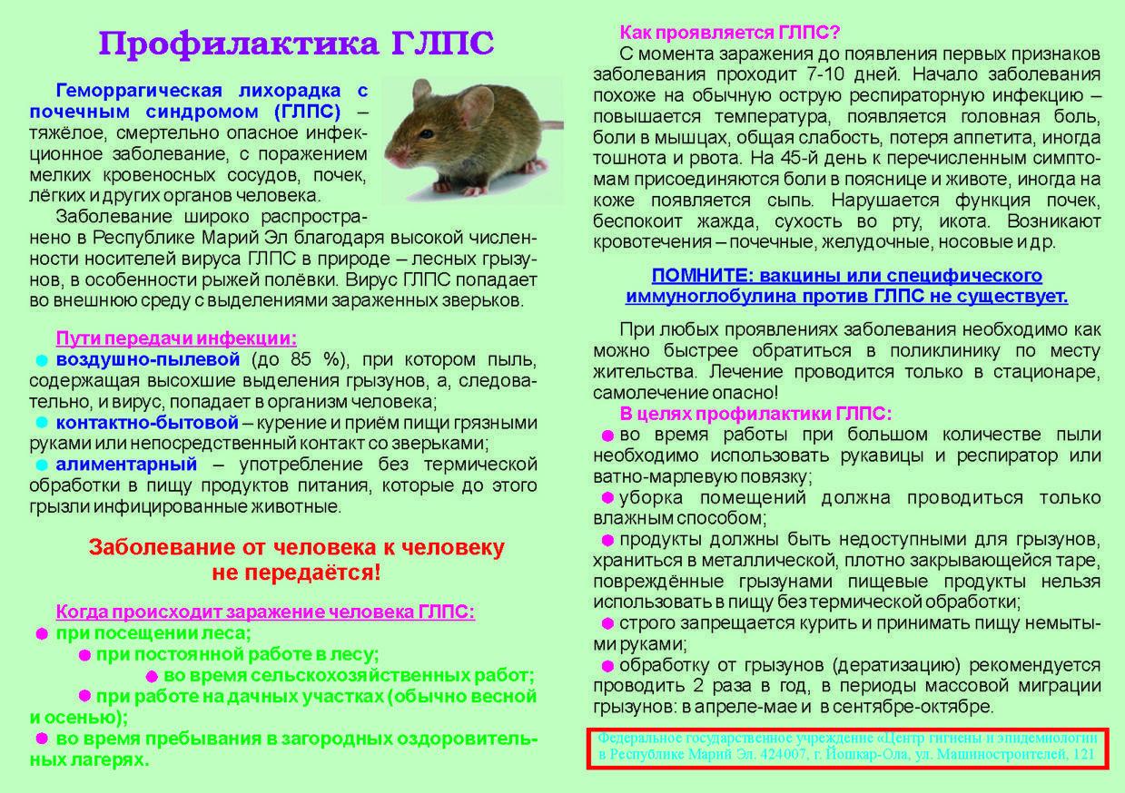 Какие болезни переносят мыши и чем можно заразиться человеку?
