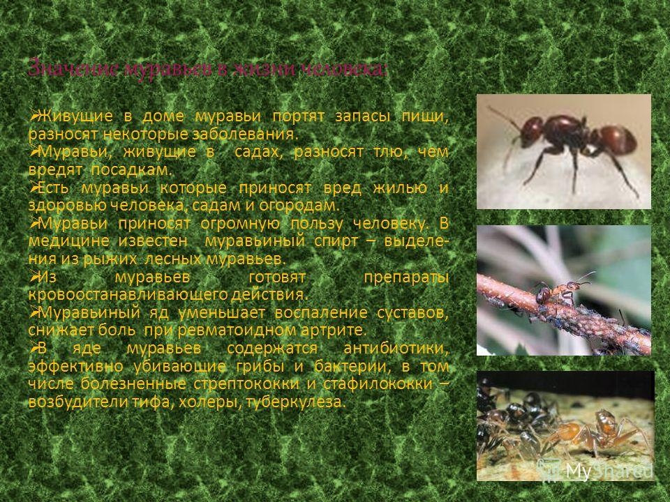 Муравьи в огороде. польза, вред и как бороться с муравьями в огороде