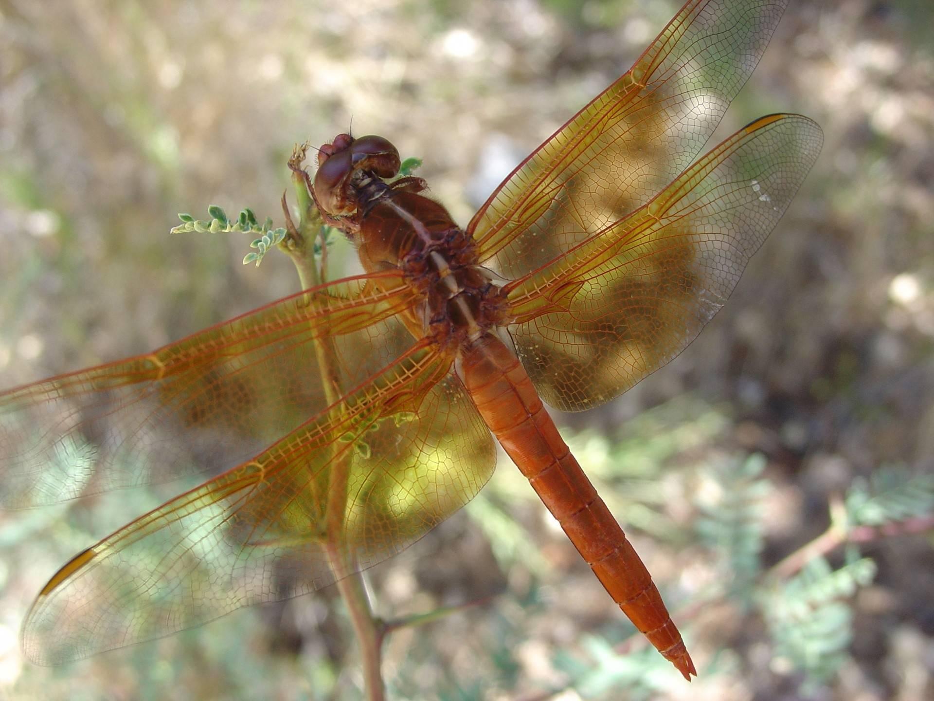 Стрекоза: какую пользу оказывает насекомое для человека