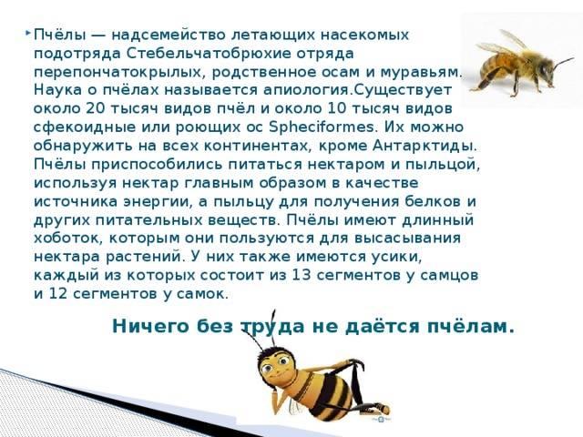 Как избавиться от муравьев на пасеке пчел, способы борьбы в улье народными средствами