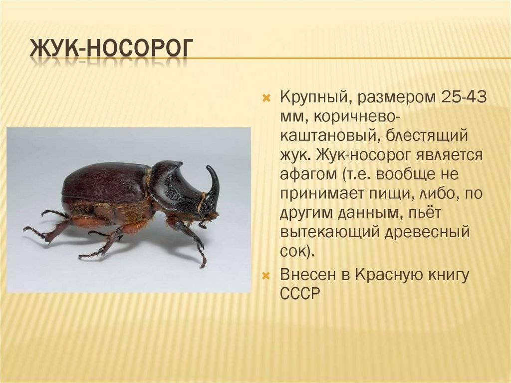 Жук носорог. описание, особенности, виды и среда обитания жука носорога | живность.ру