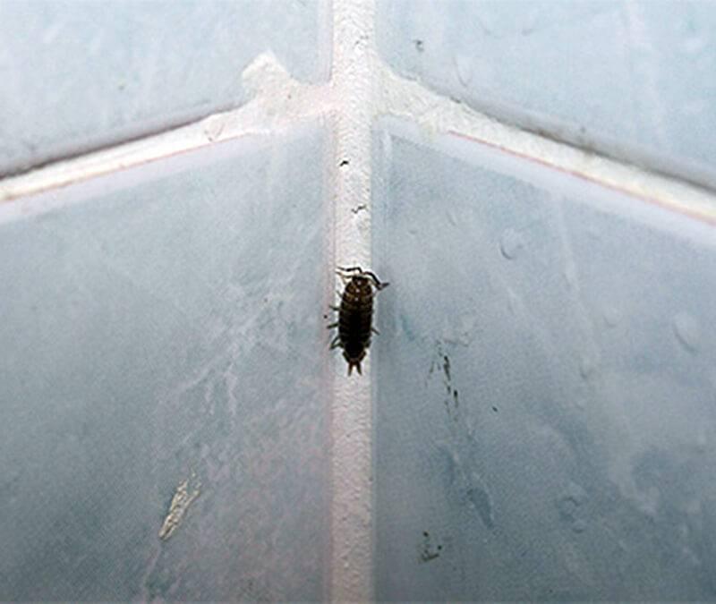 Маленькие прозрачные муравьи в квартире как избавиться от них?