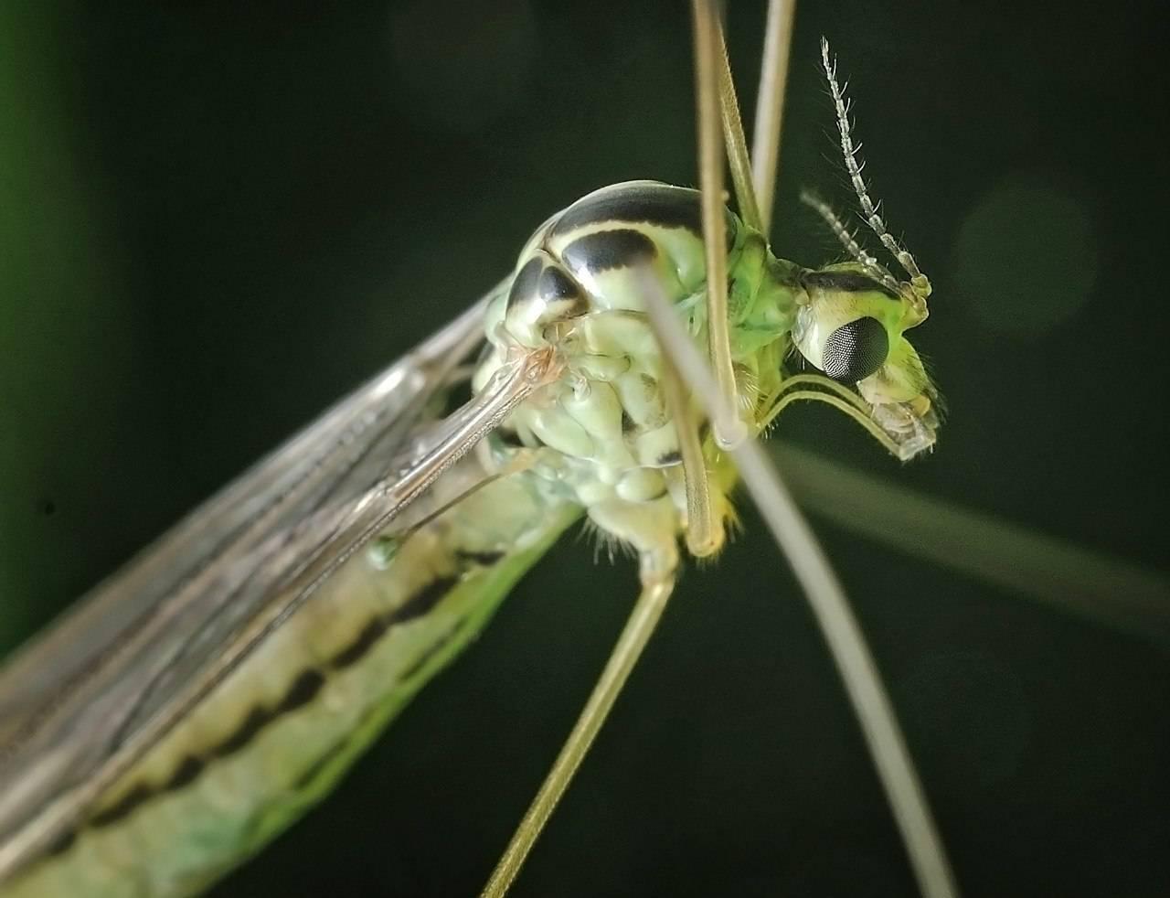 Звуки, отпугивающие комаров