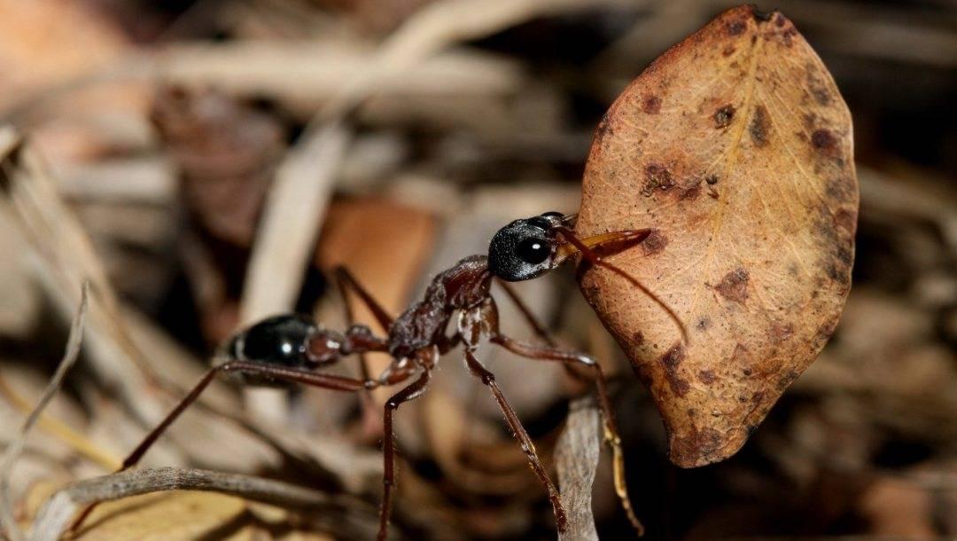 Технические характеристики легендарного советского мотороллера муравей