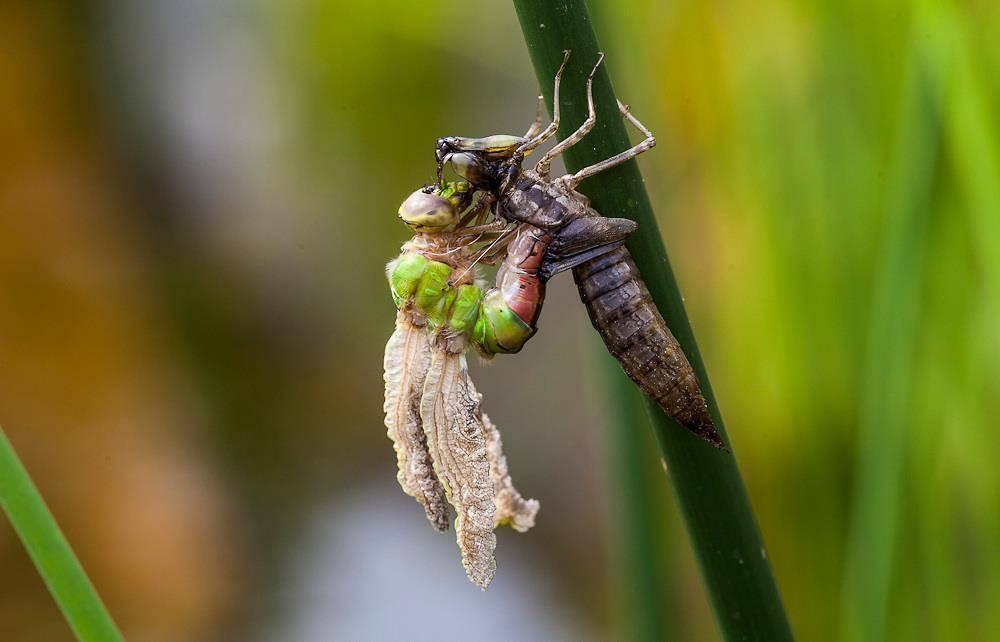 Кто питается комарами и их личинками