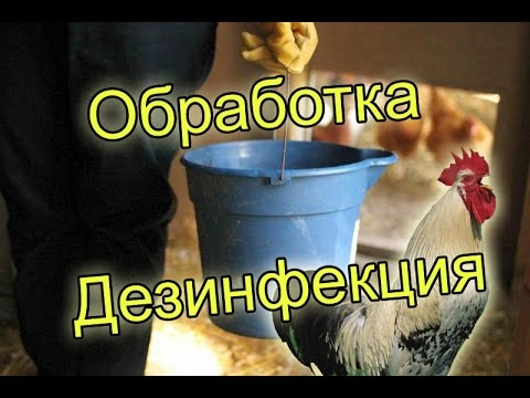 Дезинфекция курятника йодом