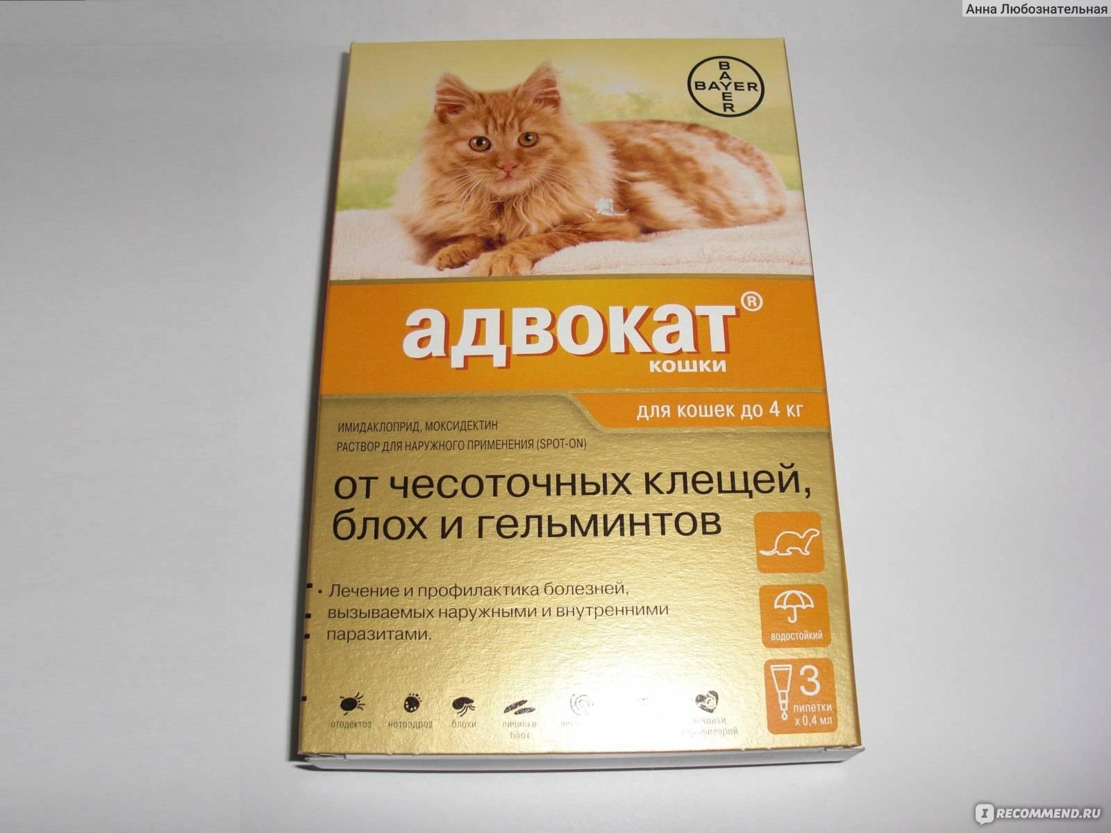 Капли от блох и клещей для взрослых кошек и котят: какие лучше выбрать, как наносить на холку, обзор эффективных средств с отзывами